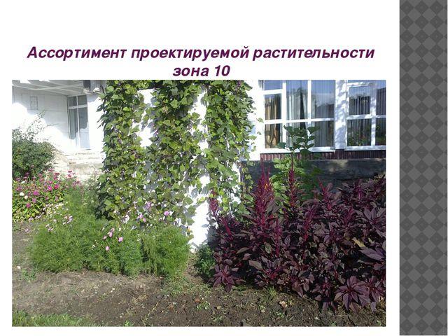 Ассортимент проектируемой растительности зона 10
