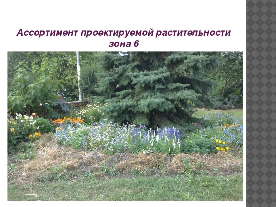 Ассортимент проектируемой растительности зона 6