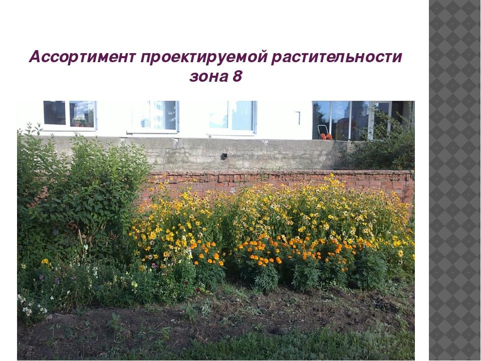 Ассортимент проектируемой растительности зона 8