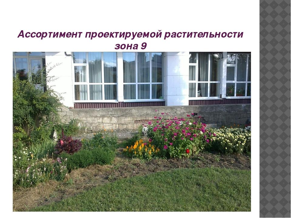Ассортимент проектируемой растительности зона 9