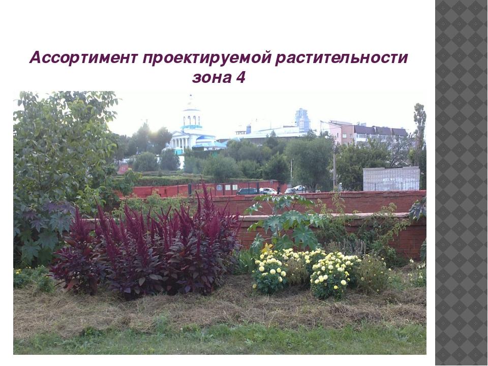 Ассортимент проектируемой растительности зона 4