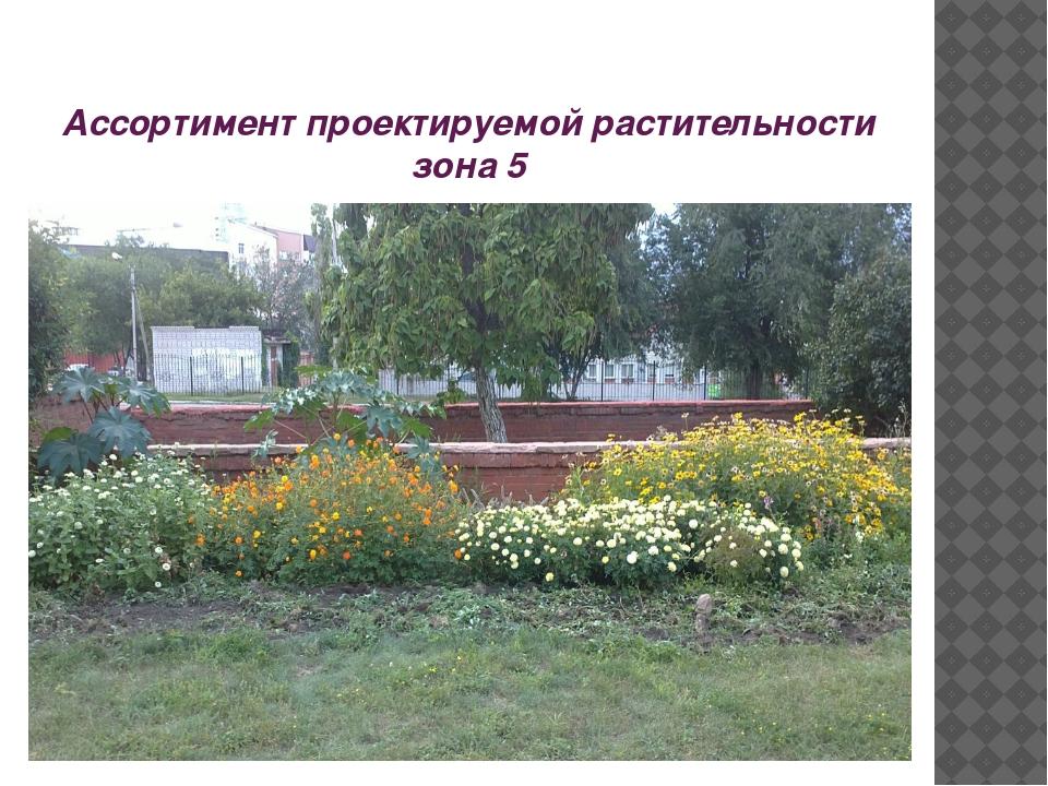 Ассортимент проектируемой растительности зона 5