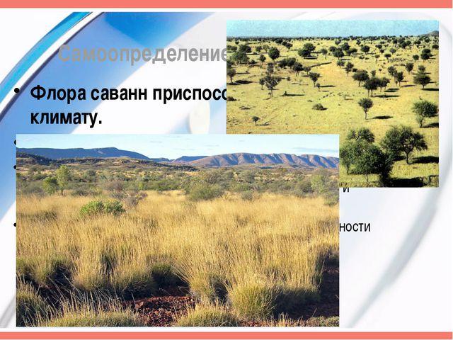Самоопределение к деятельности Флора саванн приспособлена к сухому климату. Ф...