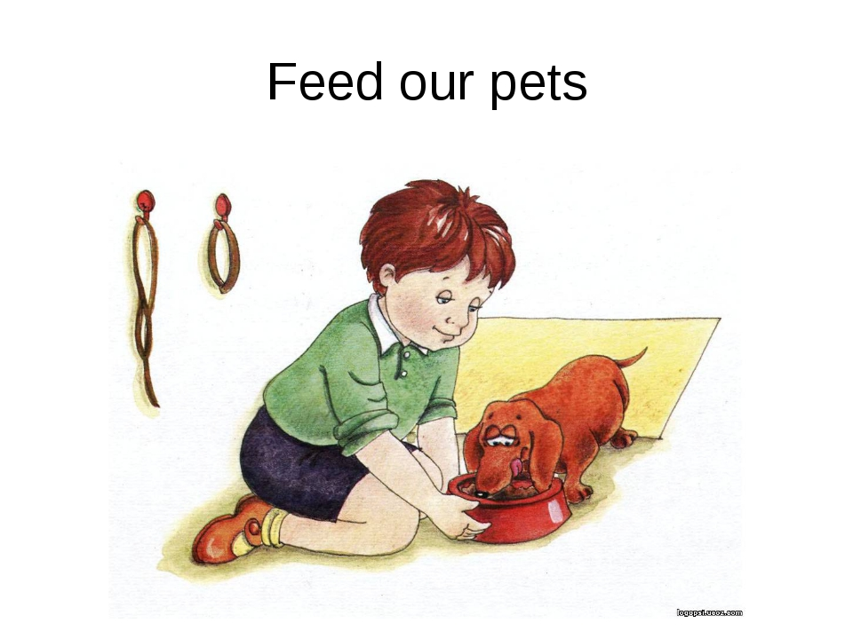 Feed our pets