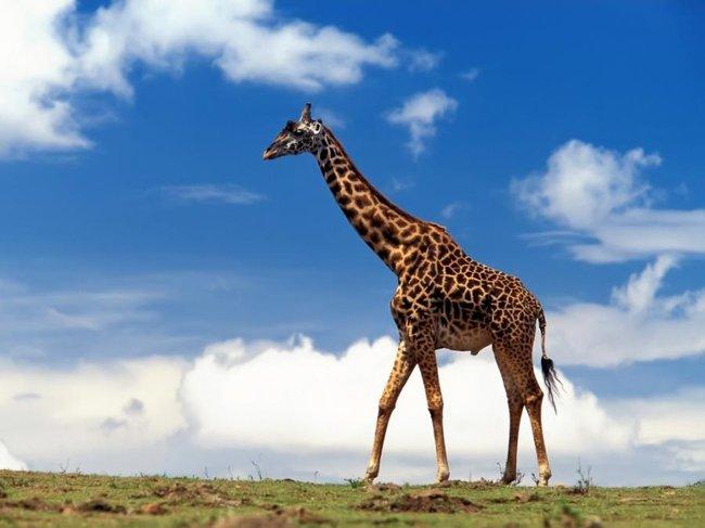 http://altfast.ru/uploads/posts/2009-02/1233442571_1218564805_042_animals.jpg