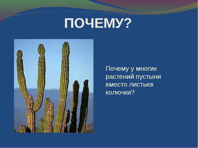 Почему у многих растений пустыни вместо листьев колючки? ПОЧЕМУ?