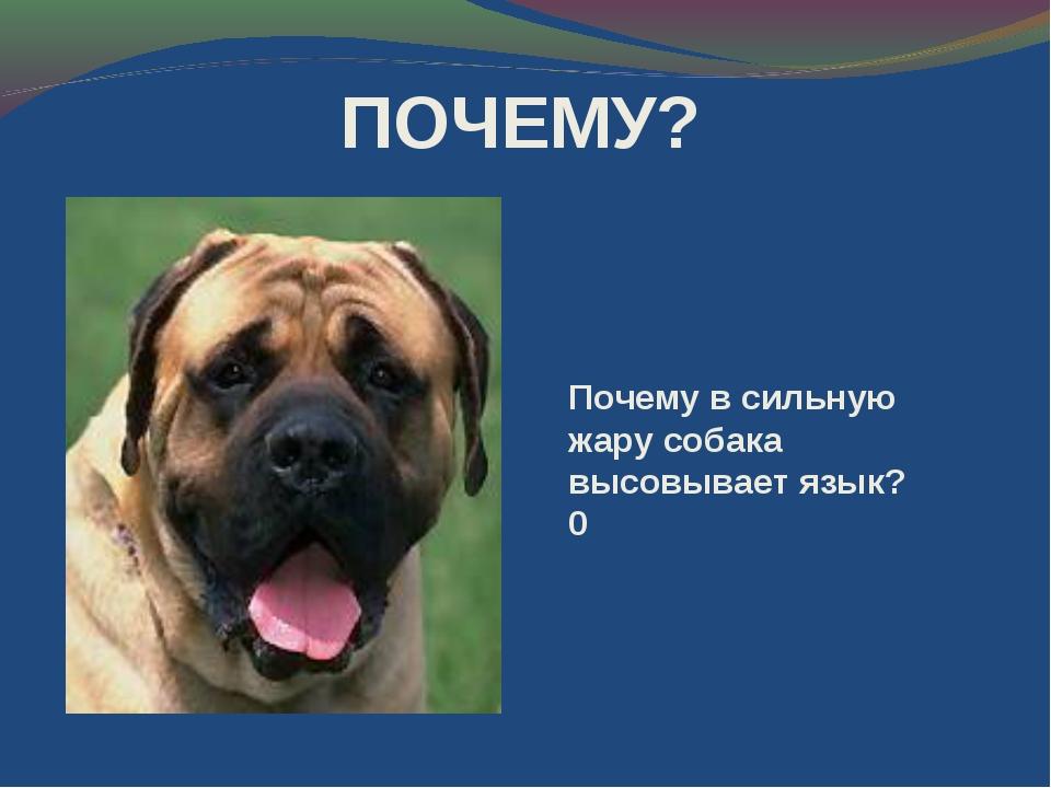 Почему в сильную жару собака высовывает язык?0 ПОЧЕМУ?