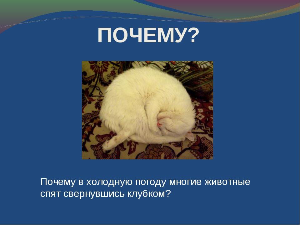 Почему в холодную погоду многие животные спят свернувшись клубком? ПОЧЕМУ?