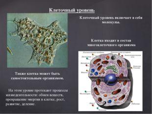 Клеточный уровень Клеточный уровень включает в себя молекулы. Клетка входит в