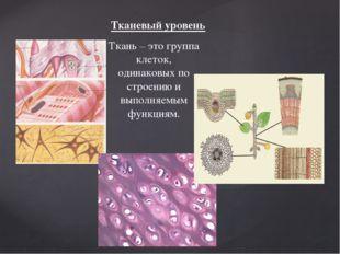 Тканевый уровень Ткань – это группа клеток, одинаковых по строению и выполняе