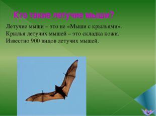 Кто такие летучие мыши? Летучие мыши – это не «Мыши с крыльями». Крылья летуч