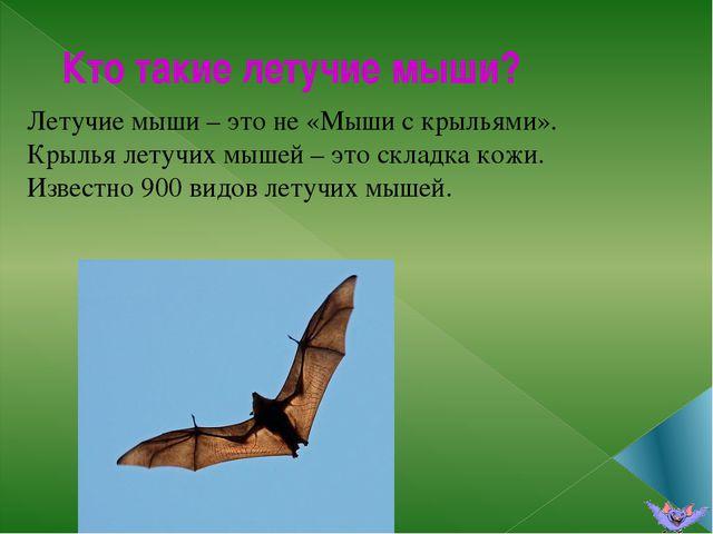 Кто такие летучие мыши? Летучие мыши – это не «Мыши с крыльями». Крылья летуч...