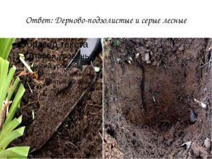 Ответ: Дерново-подзолистые и серые лесные