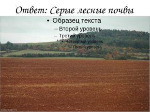 Ответ: Серые лесные почвы
