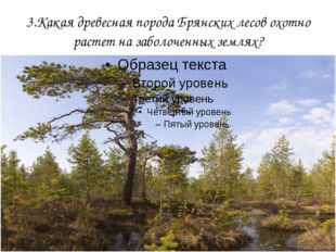 3.Какая древесная порода Брянских лесов охотно растет на заболоченных землях?