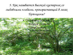 5. Как называется высокий кустарник со съедобными плодами, произрастающий в л