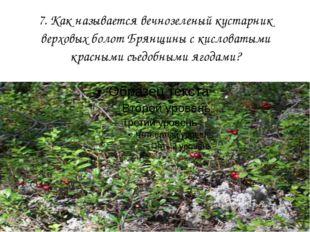 7. Как называется вечнозеленый кустарник верховых болот Брянщины с кисловатым