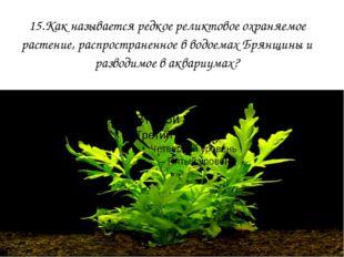 15.Как называется редкое реликтовое охраняемое растение, распространенное в в