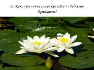 16. Какое растение самое красивое на водоемах Брянщины?