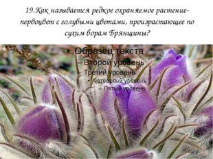 19.Как называется редкое охраняемое растение-первоцвет с голубыми цветами, пр