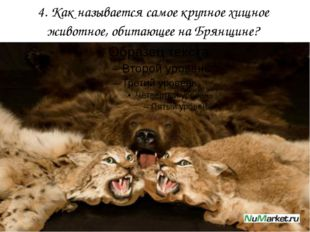 4. Как называется самое крупное хищное животное, обитающее на Брянщине?