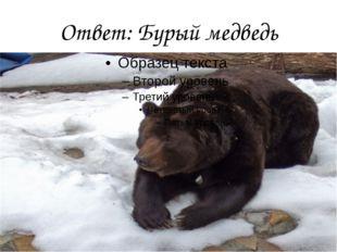 Ответ: Бурый медведь