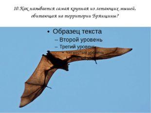 10.Как называется самая крупная из летающих мышей, обитающая на территории Бр