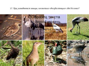 17. Как называются птицы, постоянно «восхваляющие» своё болото?