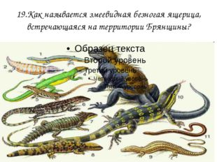 19.Как называется змеевидная безногая ящерица, встречающаяся на территории Бр