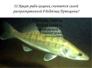 22.Какая рыба-хищник считается самой распространенной в водоёмах Брянщины?