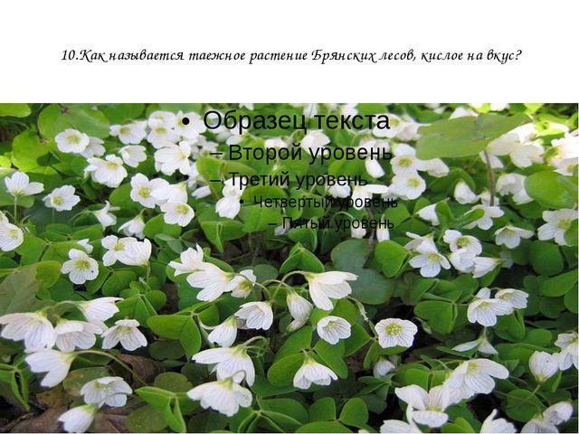 10.Как называется таежное растение Брянских лесов, кислое на вкус?