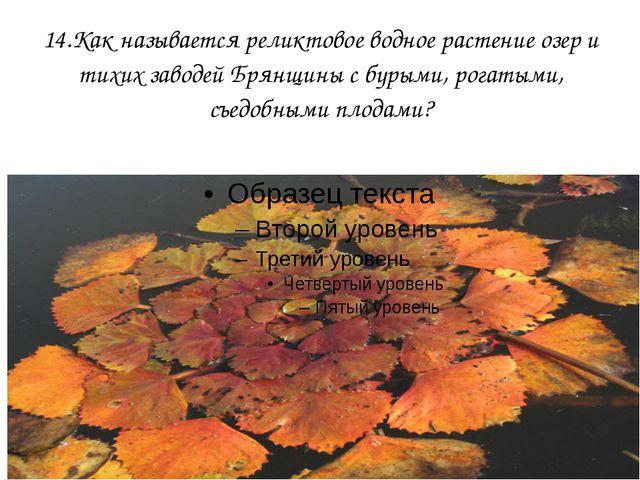 14.Как называется реликтовое водное растение озер и тихих заводей Брянщины с...