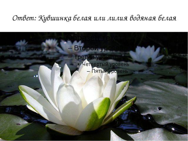 Ответ: Кувшинка белая или лилия водяная белая