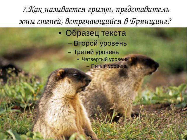 7.Как называется грызун, представитель зоны степей, встречающийся в Брянщине?