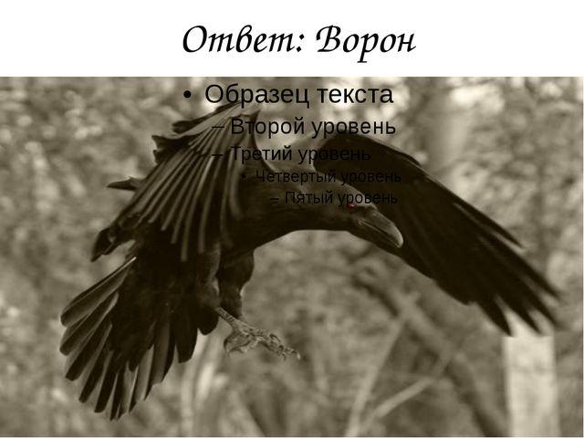 Ответ: Ворон