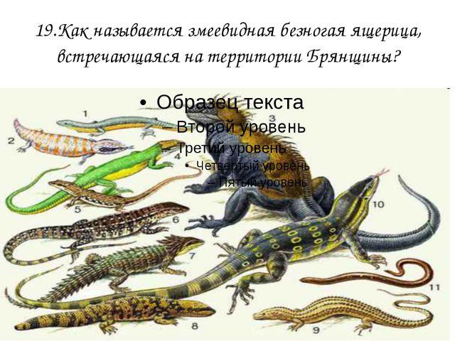 19.Как называется змеевидная безногая ящерица, встречающаяся на территории Бр...