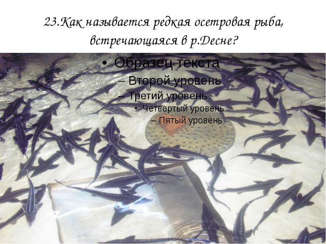 23.Как называется редкая осетровая рыба, встречающаяся в р.Десне?