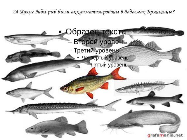 24.Какие виды рыб были акклиматизированы в водоемах Брянщины?