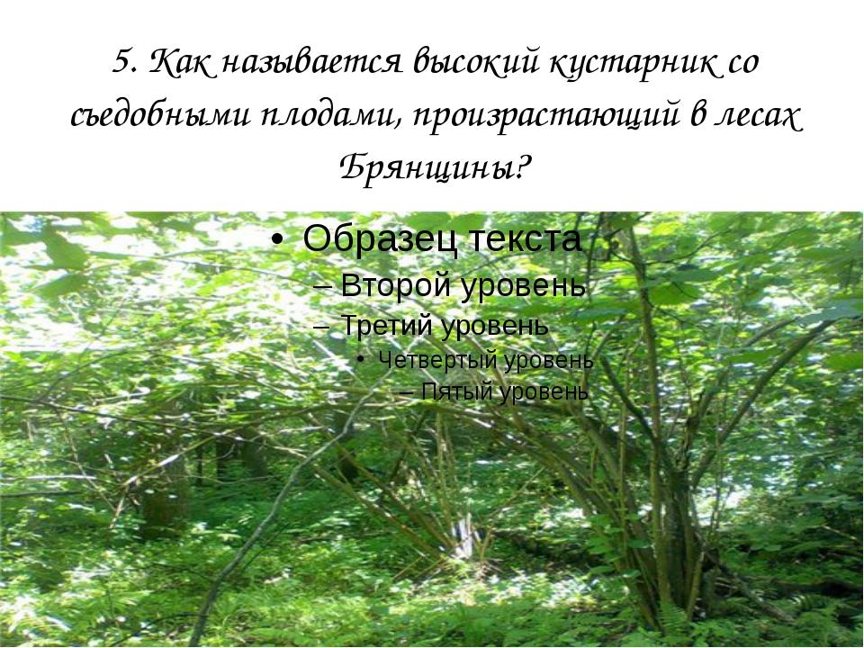 5. Как называется высокий кустарник со съедобными плодами, произрастающий в л...