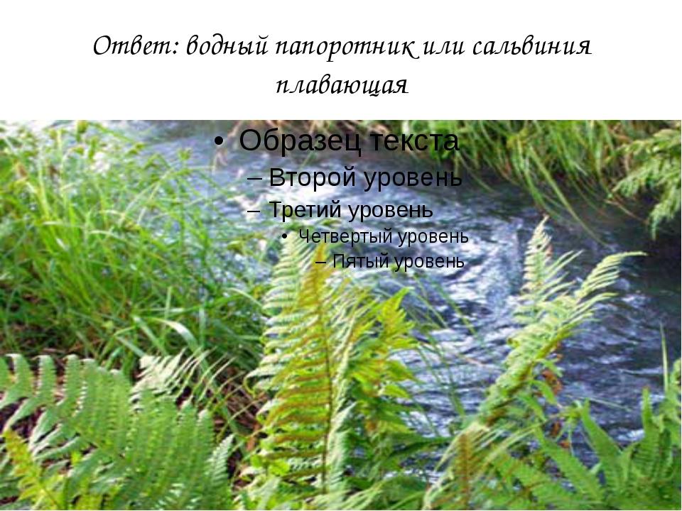 Ответ: водный папоротник или сальвиния плавающая