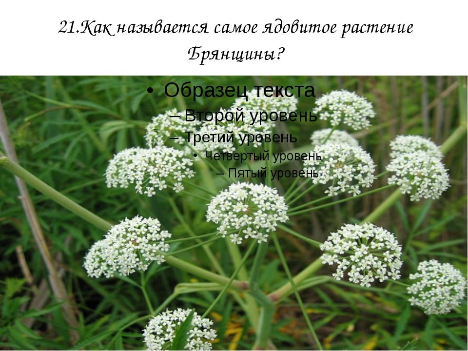21.Как называется самое ядовитое растение Брянщины?