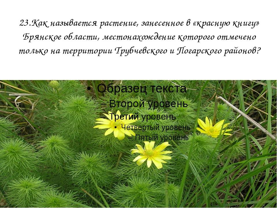 23.Как называется растение, занесенное в «красную книгу» Брянское области, ме...