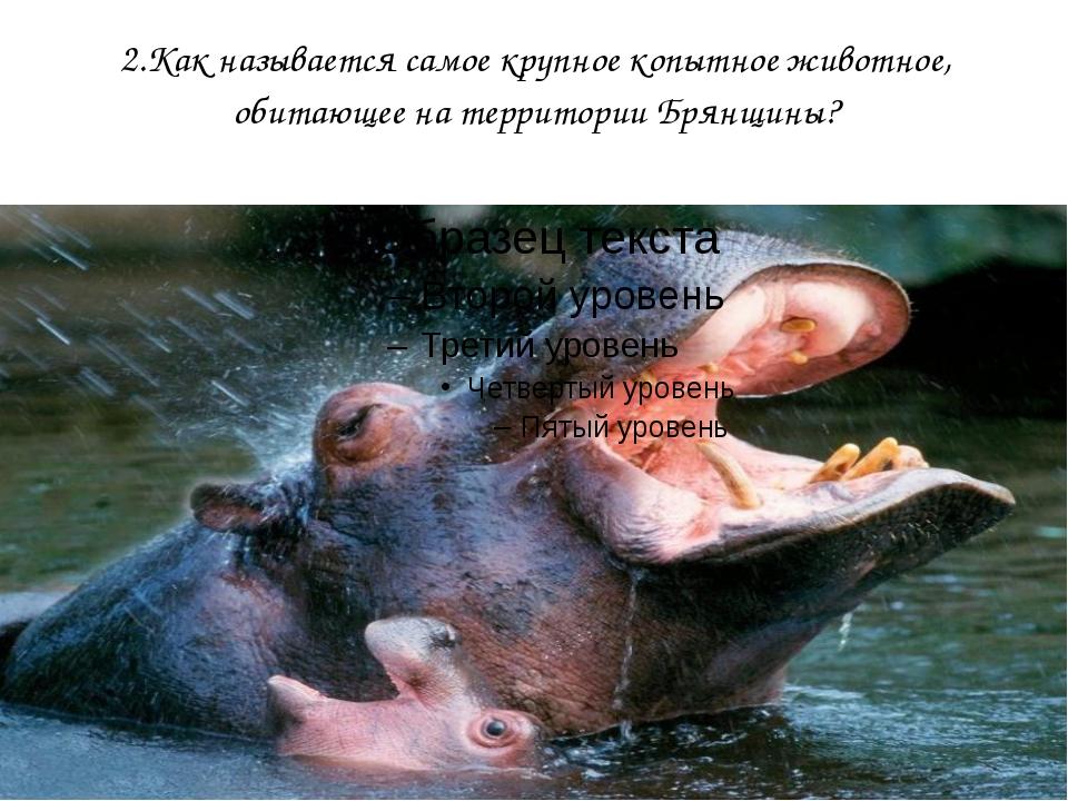 2.Как называется самое крупное копытное животное, обитающее на территории Бря...