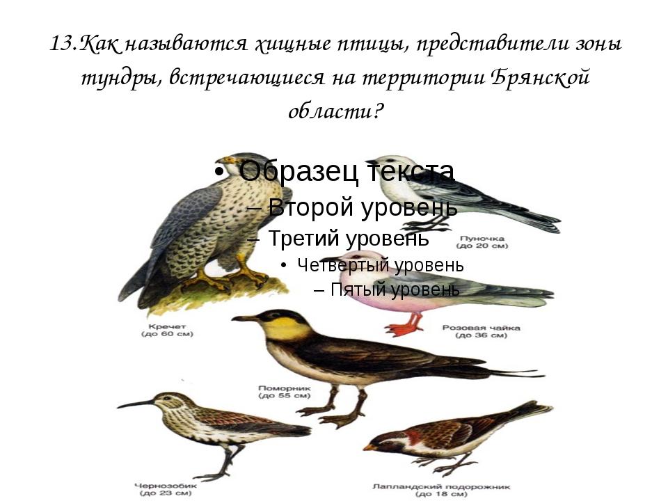 13.Как называются хищные птицы, представители зоны тундры, встречающиеся на т...