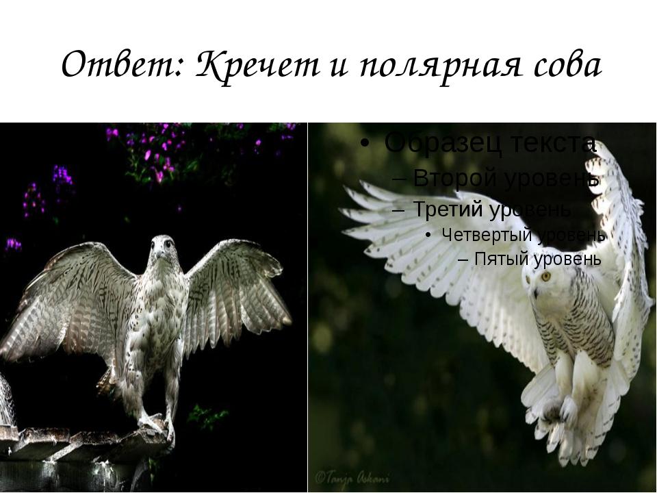 Ответ: Кречет и полярная сова
