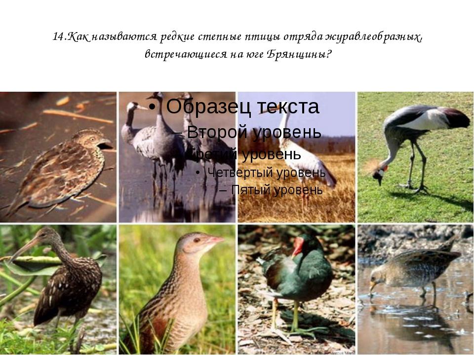 14.Как называются редкие степные птицы отряда журавлеобразных, встречающиеся...