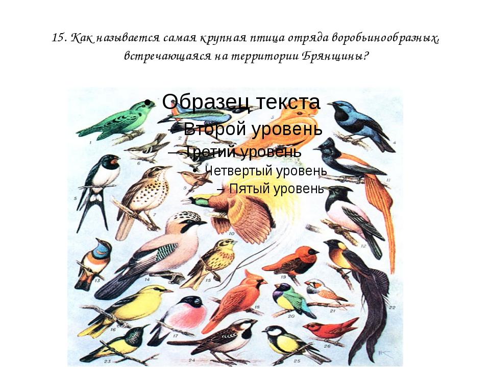 15. Как называется самая крупная птица отряда воробьинообразных, встречающаяс...