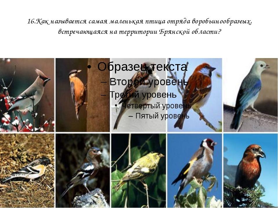 16.Как называется самая маленькая птица отряда воробьинообразеых, встречающая...