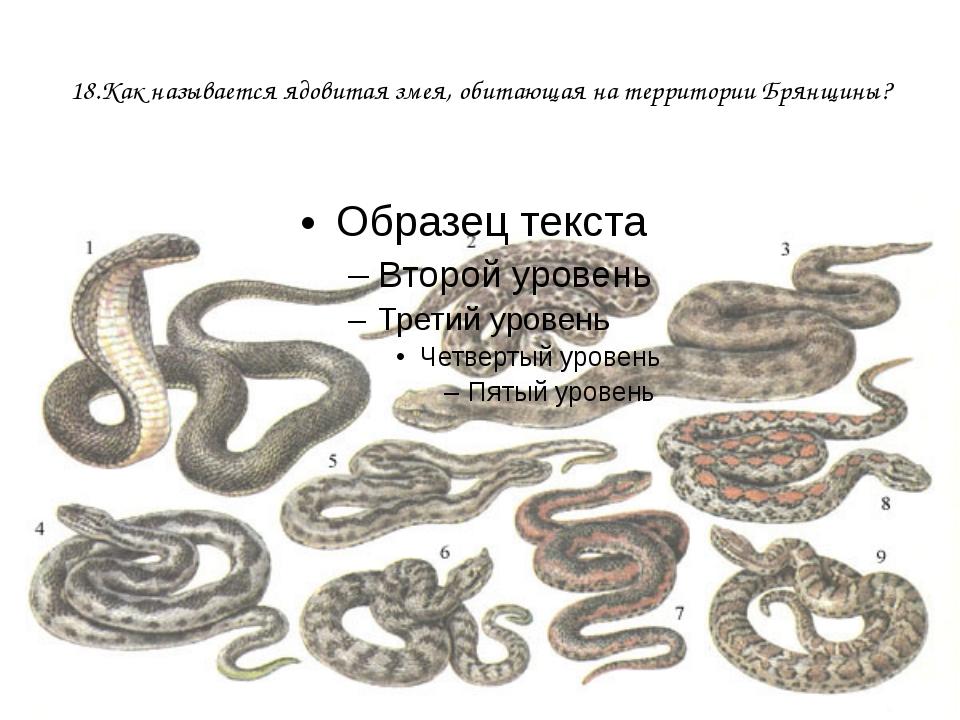 18.Как называется ядовитая змея, обитающая на территории Брянщины?