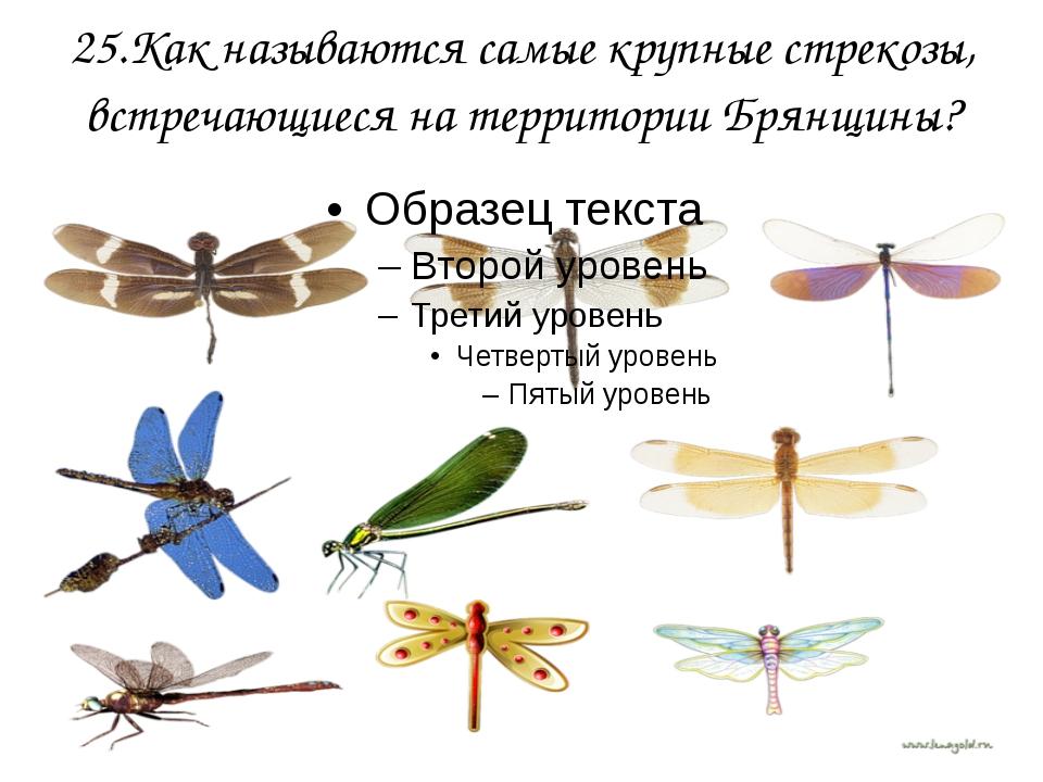 25.Как называются самые крупные стрекозы, встречающиеся на территории Брянщины?